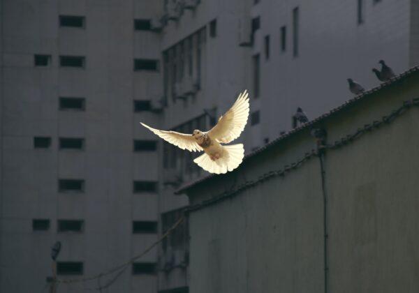 23 dicembre. Politiche di guerra e legami di pace